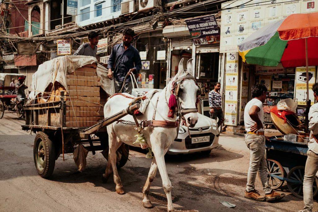 Pferdekarren in Old Delhi