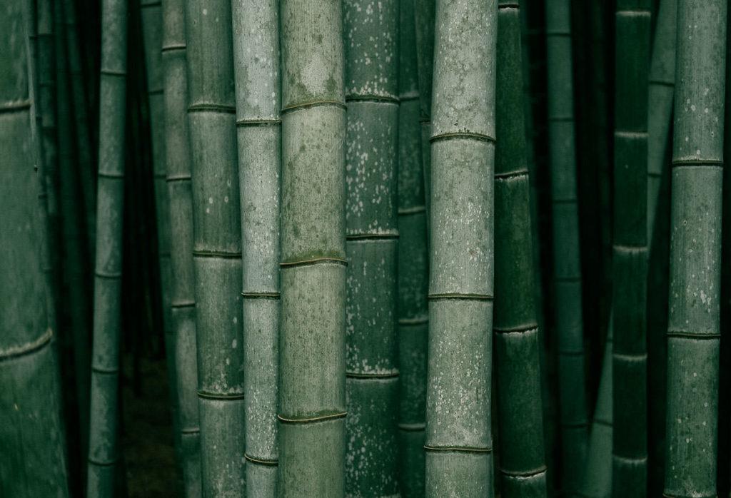 Bambus in Kyoto