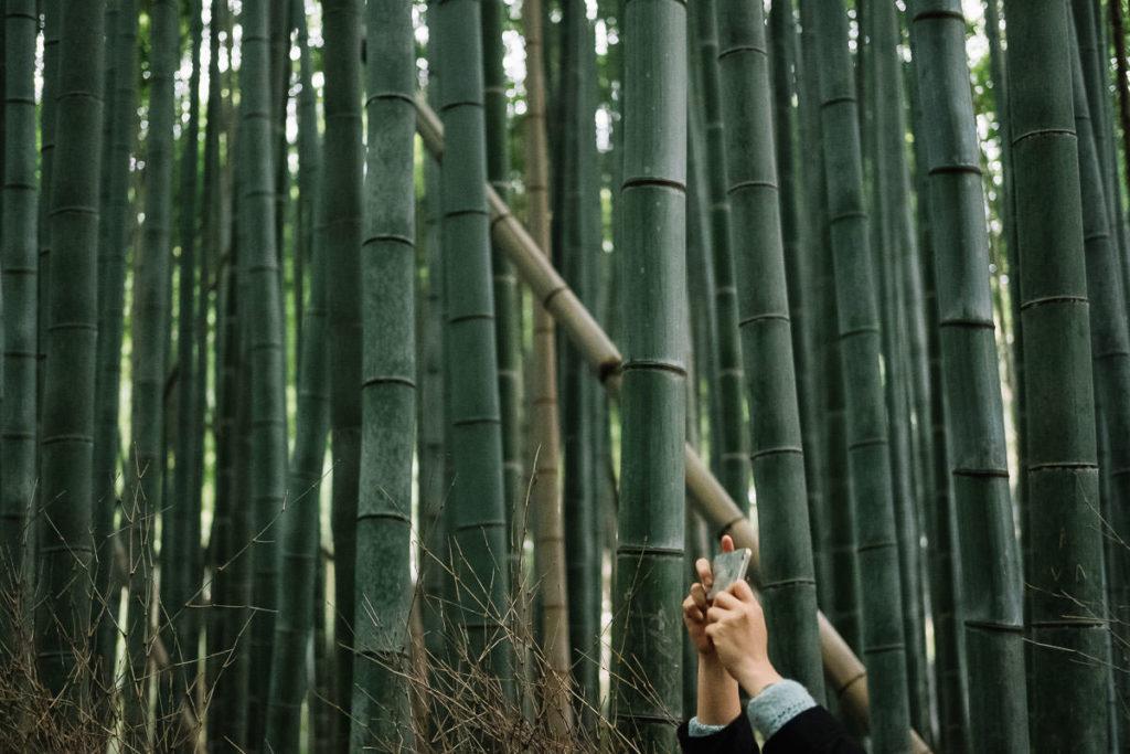 Bambuswald in Osaka und Kyoto