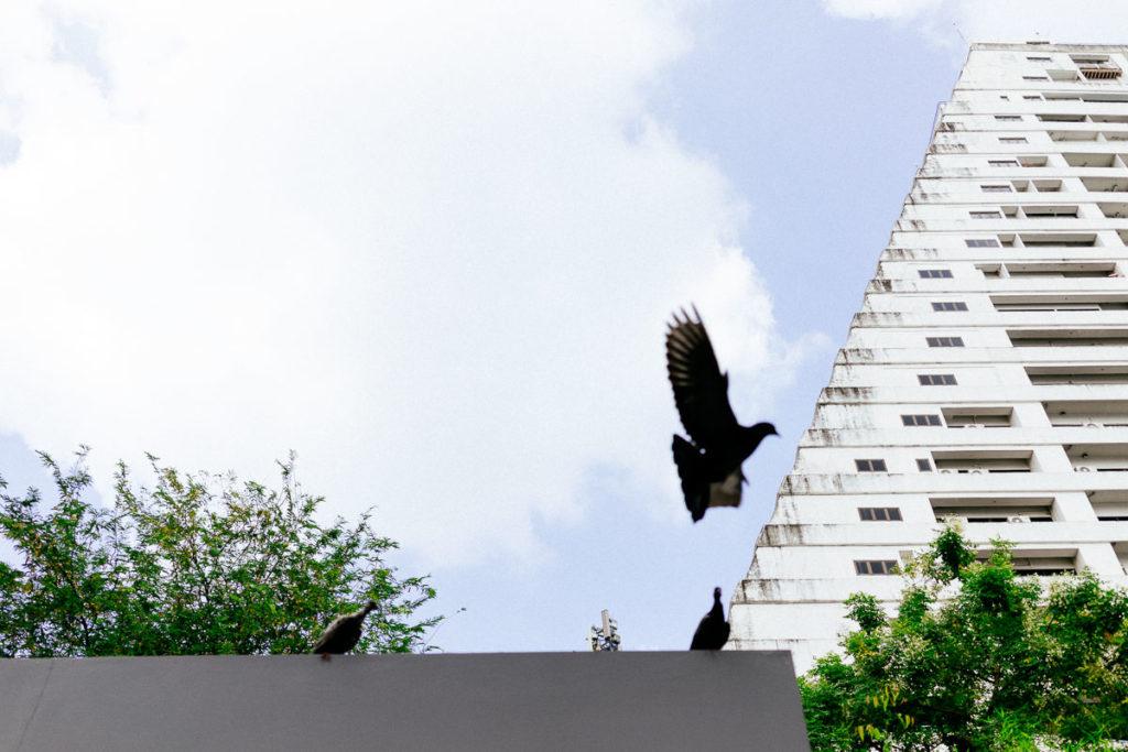 Taube fliegt durchs Bild im Viertel Ari in Bangkok