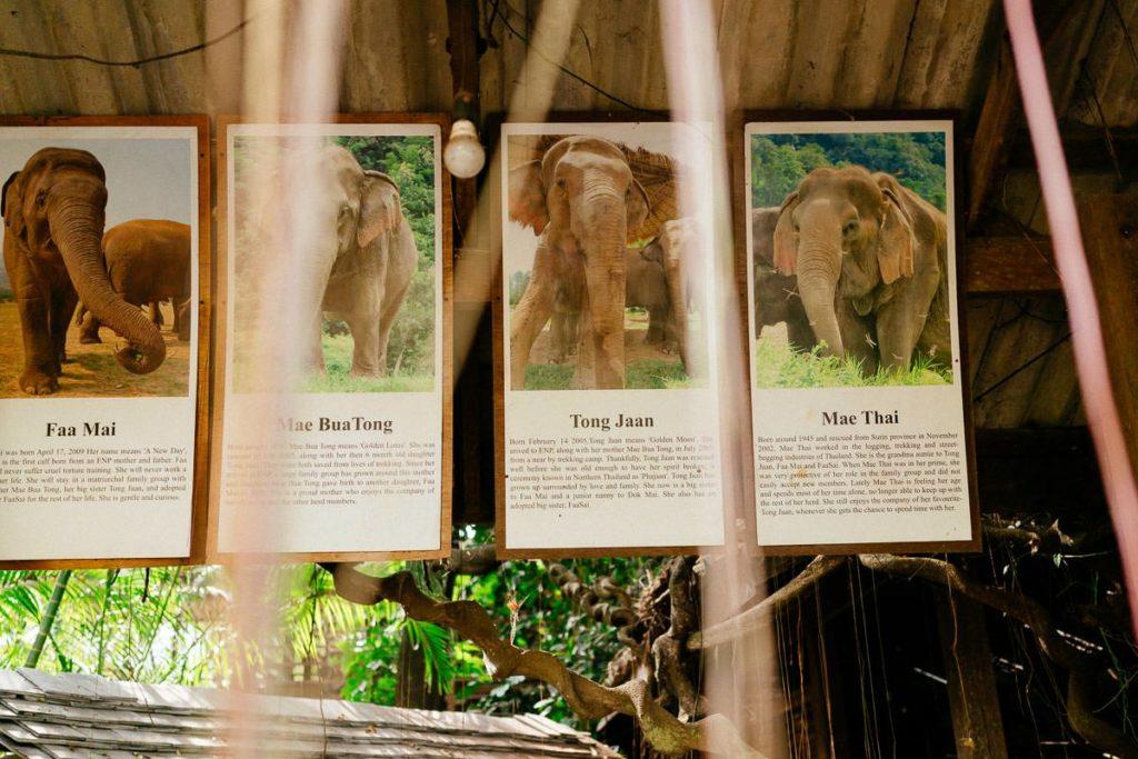 Porträts einiger Elefanten, die im Elephant Nature Park leben
