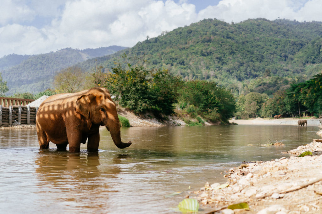 Ein Fluss fliesst durch den Elephant Nature Park. Dort nehmen die Tiere gerne Bäder