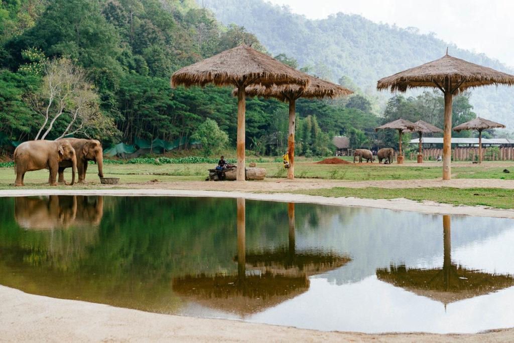 Die Elefanten im Elephant Nature Park verbringen ihren Tag oft in kleinen Gruppen von zwei bis drei Tieren